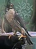 birdofprey.jpg