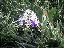 flowerfae.jpg