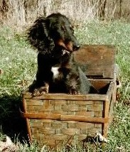 A picnic basket!  YAY!!!